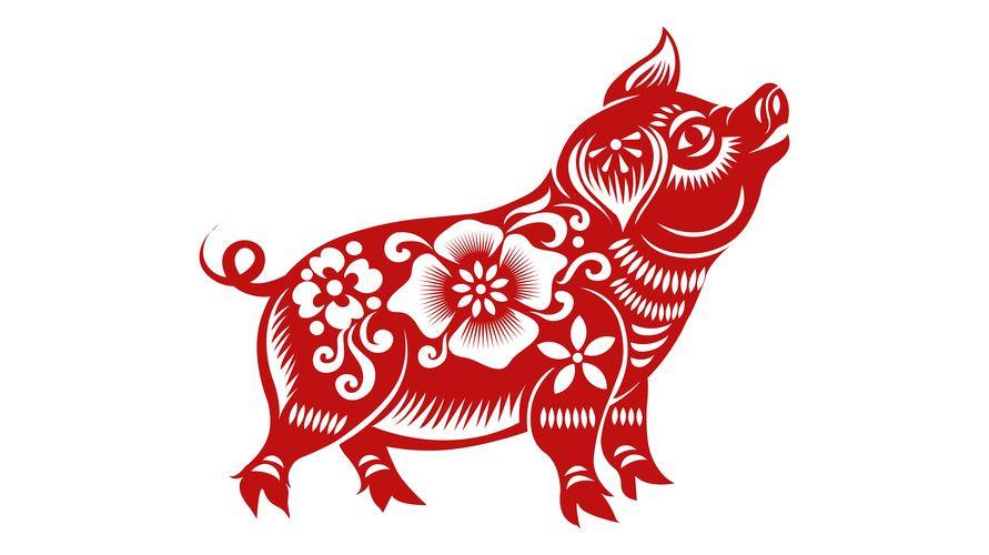 Karakter shio babi adalah pekerja keras yang beruntung