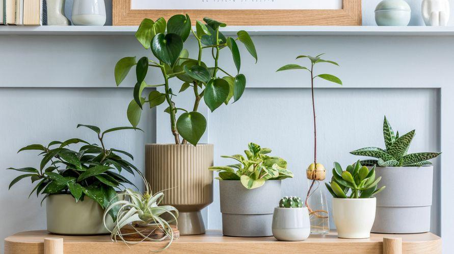 Tanaman dalam ruangan bermanfaat untuk kesehatan karena bisa mengurangi stres hingga menyaring udara kotor