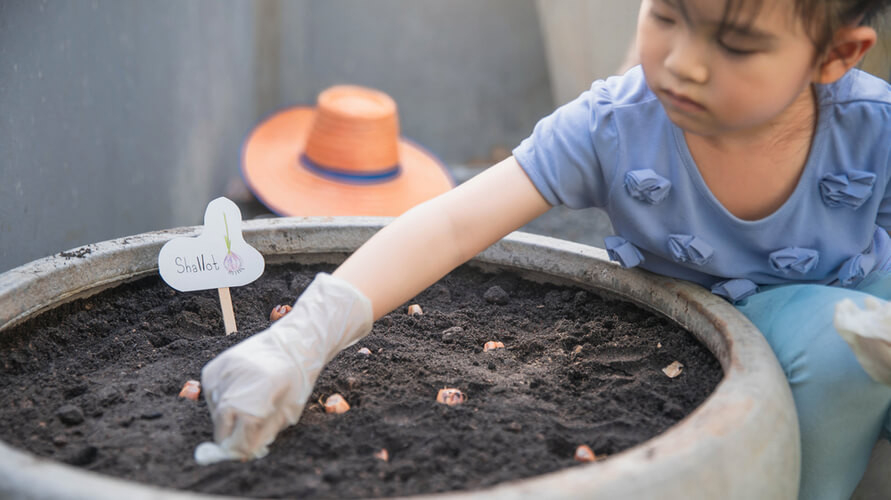 Cara menanam bawang merah bisa memanfaatkan pekarangan atau pot